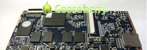 gooseberry_680p
